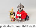 dog, dogs, new year's pine decoration 36919636