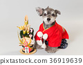 dog, dogs, new year's pine decoration 36919639