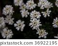 ฤดูหนาว,ไม้,โรงงาน 36922195
