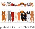 ชุดของสุนัขตัวเล็กยืนขึ้น 36922350