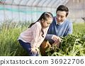 아빠,딸,가족,시골,한국 36922706
