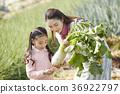 가족, 농업, 엄마 36922797