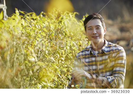 장년,남자,밭,채소,수확,한국 36923030