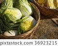 채소,재료,배추김치,김장 36923215