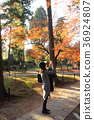 Woman photographing autumn leaves in Kyoto 36924807