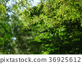 nature background 36925612