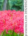花朵 花 花卉 36926002