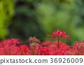 花朵 花 花卉 36926009