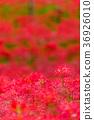 花朵 花 花卉 36926010