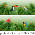 Tropical plants leaves banner with birds 36927750