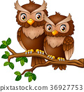 Cute couple owl on the tree branch 36927753