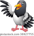 Cartoon funny Pigeon bird presenting 36927755