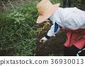 farm 36930013