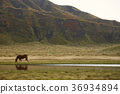 สัตว์,ภาพวาดมือ สัตว์,ม้า 36934894