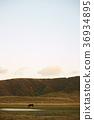สัตว์,ภาพวาดมือ สัตว์,ม้า 36934895