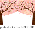 cherry blossom, cherry tree, vegetation 36936781