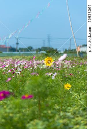 風間鄉農村郊外郊區漱口郊外和田野Kaumi Himawara 36938065