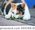 猫 猫咪 小猫 36938818