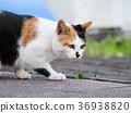 猫 猫咪 小猫 36938820