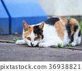 猫 猫咪 小猫 36938821