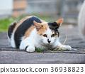猫 猫咪 小猫 36938823