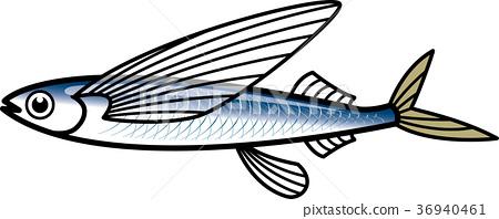飛魚(以前) 36940461