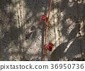 autumn, background, fall 36950736