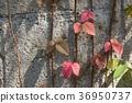 autumn, background, fall 36950737