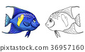 Arabian Angel Fish colorful and contour 36957160