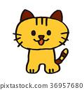 고양이 컬러 36957680