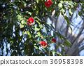 Rose flower and blue sky 36958398