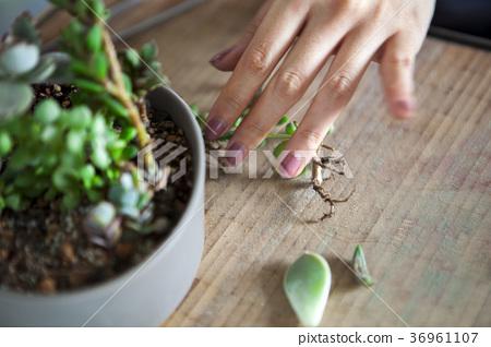 種花,多肉植物,花盆,花、肉の植物、花のポット、Flowers, more meat plants 36961107