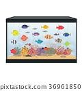 Rectangular aquarium with colorful fish 36961850