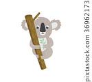 koala, animal, vector 36962173