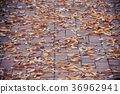 Fallen autumn leaves on a side walk block at bench 36962941