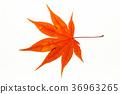 Autumn maple leaf on light box 36963265