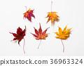 잎, 배경, 가을 36963324