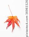 잎, 배경, 가을 36963326