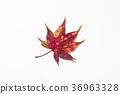 잎, 배경, 가을 36963328