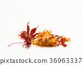 잎, 배경, 가을 36963337