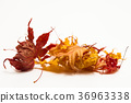 잎, 배경, 가을 36963338