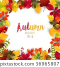 Autumn leaves frame isolated background 36965807