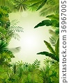 Exotictropical background 36967005
