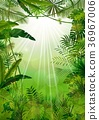 Exotic tropical background 36967006