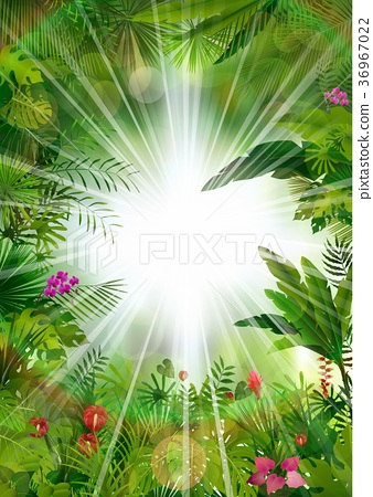 Tropical background beautiful 36967022