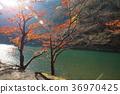 arashiyama,autumn,kyoto 36970425