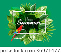 tropical leaves hello summer green background. 36971477