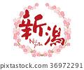 新潟刷字符櫻花框架 36972291
