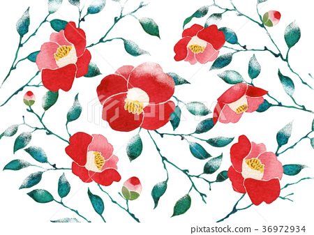 Camellia wallpaper background watercolor illustration 36972934