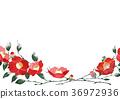 คาเมลเลีย,ดอกไม้,ฤดูหนาว 36972936